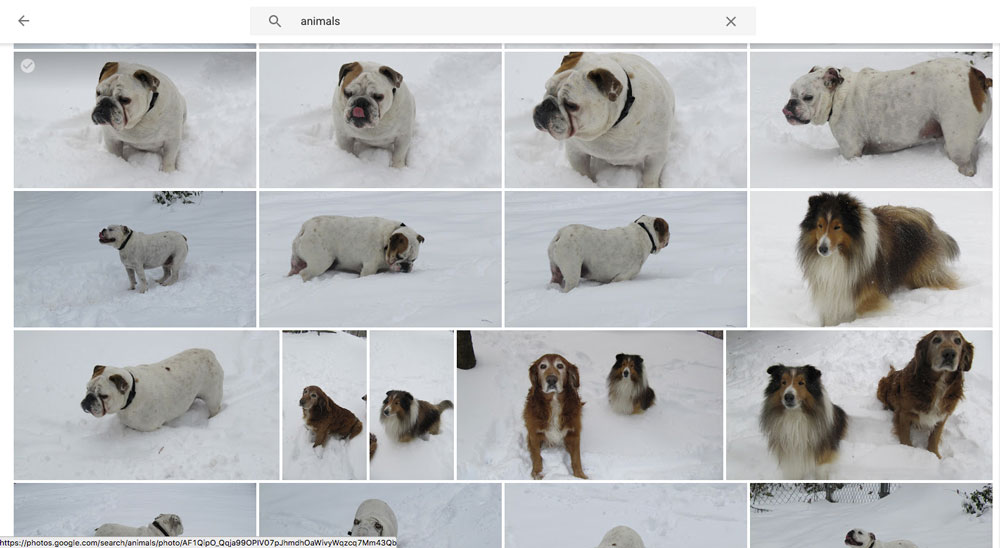 Google Photos search for animals